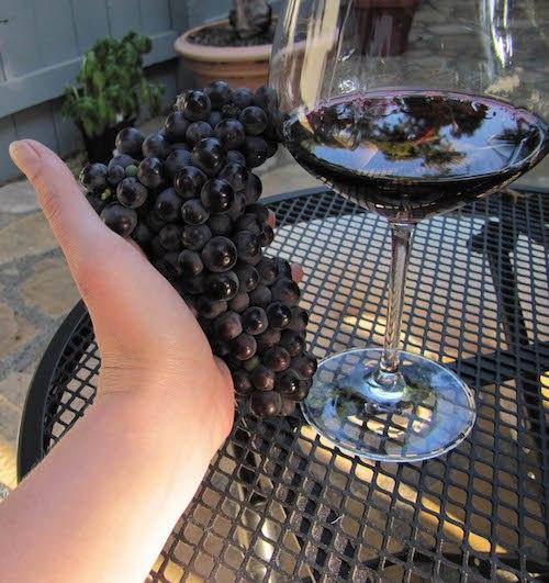 Winemaking-101-Part-1-Ripe-Grapes-Image-5